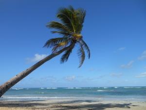 Poradnik Offshore - jak dostać się do raju podatkowego?